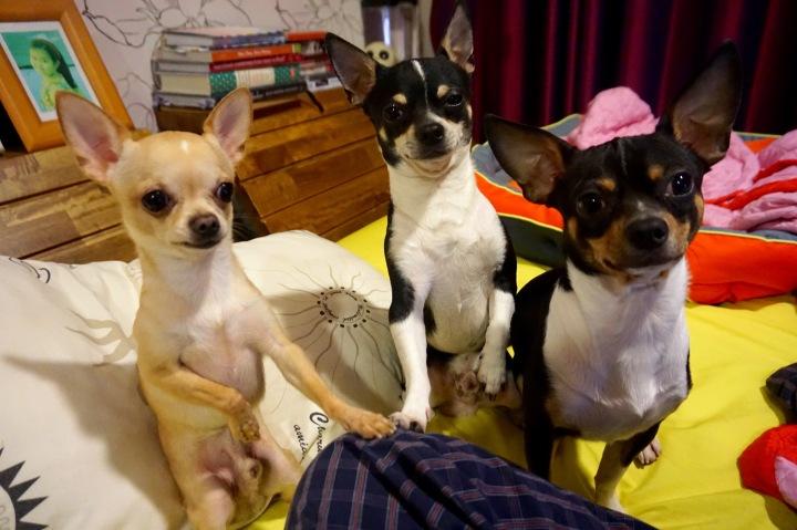 My three little devils | เจ้าปีศาจน้อยทั้งสาม